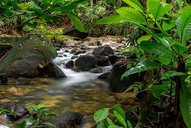 Kledang Saiong Forest Eco Park | Mitsubishi Motors Malaysia