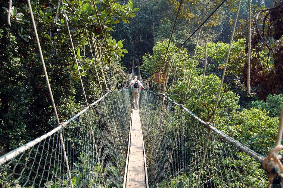 Taman Negara National Park | Mitsubishi Motors Malaysia